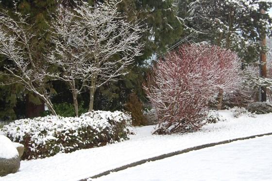 Snow_025