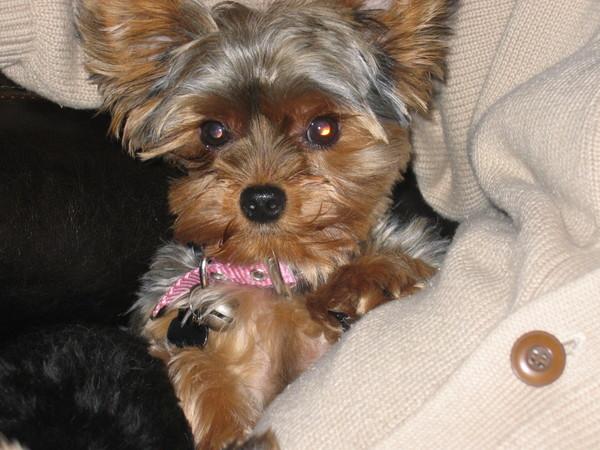 Puppies_002